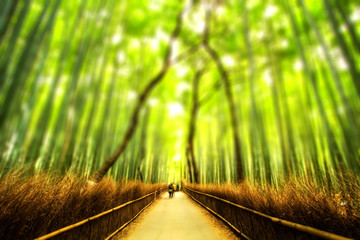 Bamboo Forest (18 megapixel)