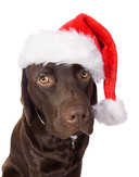 Dog with Santa hat picture